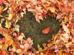 autumn-1712756_960_720