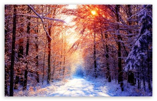 sunny-winter